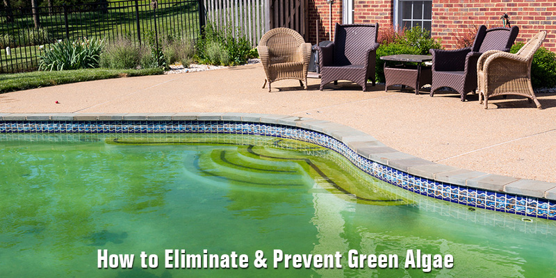 How To Eliminate And Prevent Green Algae Florida Swimming Pool Care
